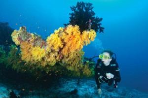 Farbenfrohe Unterwasserwelt