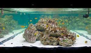 """Themenbereich """"Welt der Korallen"""" im Sea Life Speyer"""