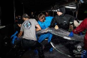 """Crewmitglieder der """"Steve Irvin"""" bergen ein treibendes Netz aus dem Meer"""