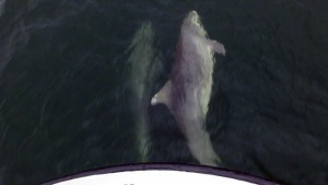 Delfie und Selfie in einer Bugwelle