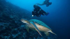 Tauchgang mit Meeresschidkröte