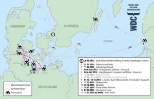 Große Tümmler in der Ostsee