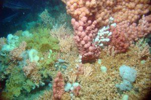 Kaltwasserkorallenriff