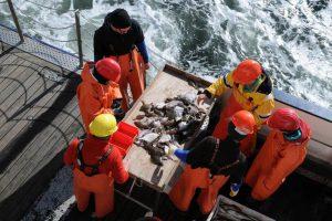 Wissenschaftler untersuchen Fischbestände