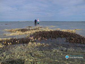 Korallenbleiche in der Region von Kimberly, West Australien