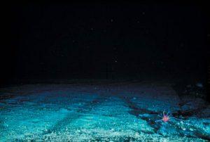 Spuren der Schleppnetzfischerei