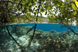 Mangroven und Riff