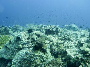 gesundes tropische Korallenriff