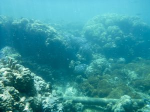 on Ozeanversauerung betroffenes tropisches Korallenriff