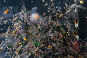 Plankton-Proben