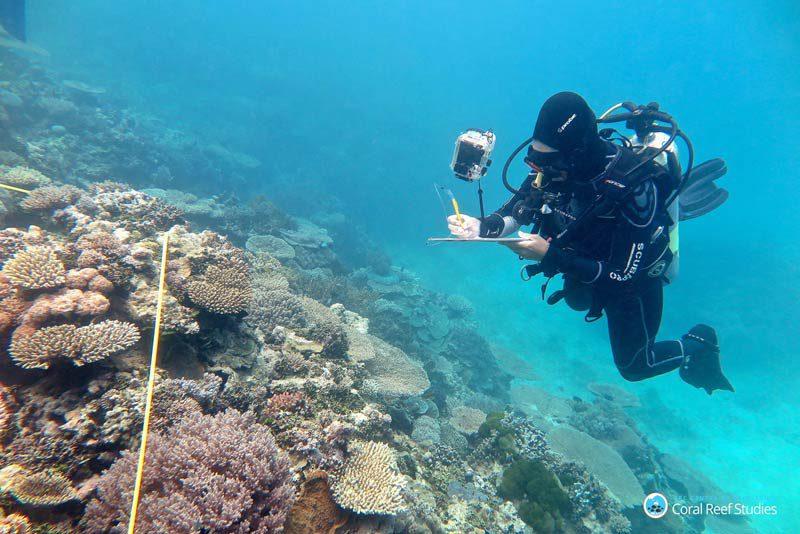 Untersuchung von Korallenfeldern