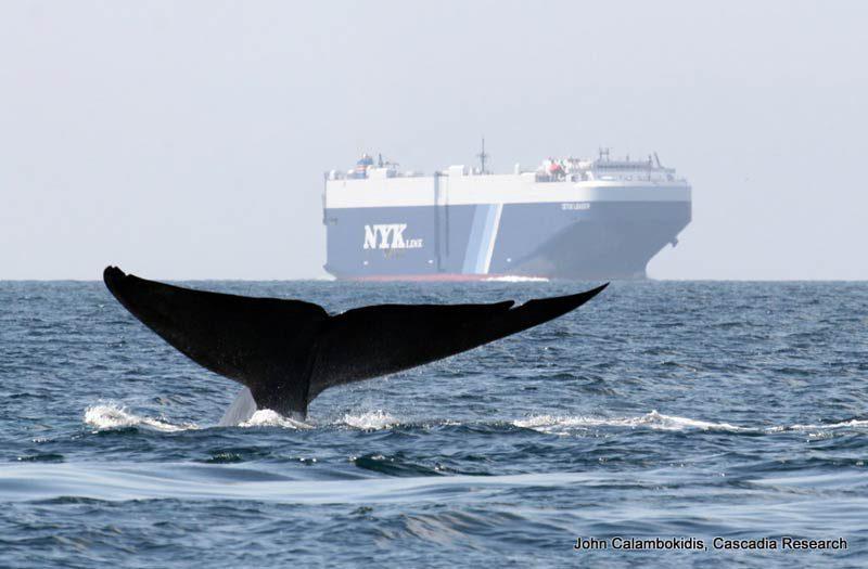 Schiff und Wal