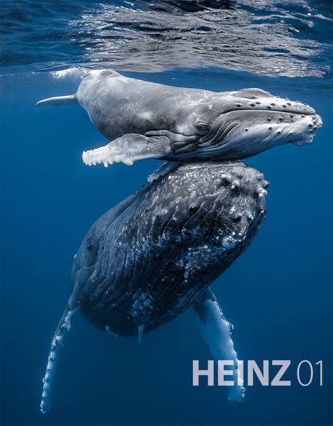 HEINZ01