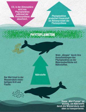 Infografik Phytoplankton