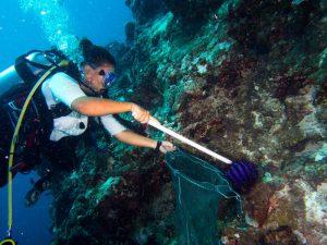 Taucher sammeln Dornenkronen