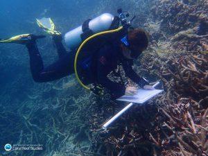Tauchender Korallenforscher