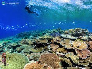 Kartierung gesunder Korallen