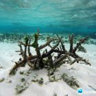 Geschwächtes Riff