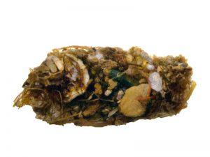 Kot-Pellet eines Kaninchenfischs