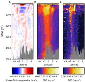 Zonale Strömungsgeschwindigkeit und Gehalt an partikulärem organischem Kohlenstoff