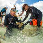 Einsammeln von Korallen