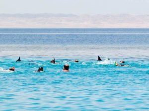 Touristen und Delphine