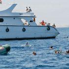 Von Touristen und Zodiac eingekreister Delphin